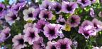Kvetoucí rostliny