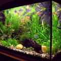 Sladkovodní akvárium