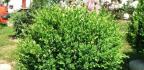 Výsadba okrasných rostlin