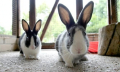 Křížení králíků