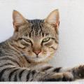 Alergie na kočky
