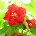 Kvetoucí pokojové rostliny