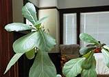 Nenáročné pokojové rostliny