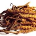 Tibetská houba cordyceps