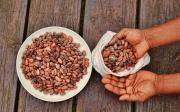 Kakaové boby