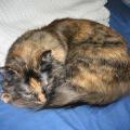 Výživa kočky ponádorovém onemocnění
