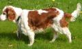 Pes seškrábe akouše