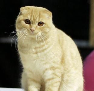je těsný kočička dobré