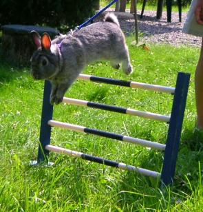 Plemena králíků