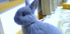 Ukázkové druhy středních plemen králíků chovaných namaso ikožešinu