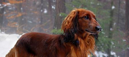 Pes si vykusuje chlupy uocasu